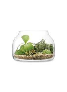 LSA Plant大号漏斗形玻璃花盆