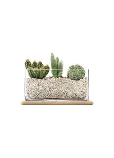 LSA Plant长方形玻璃花盆橡木托盘两件套